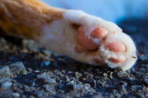 猫の「前足」を「手」と呼ぶ人に猫への愛を感じる
